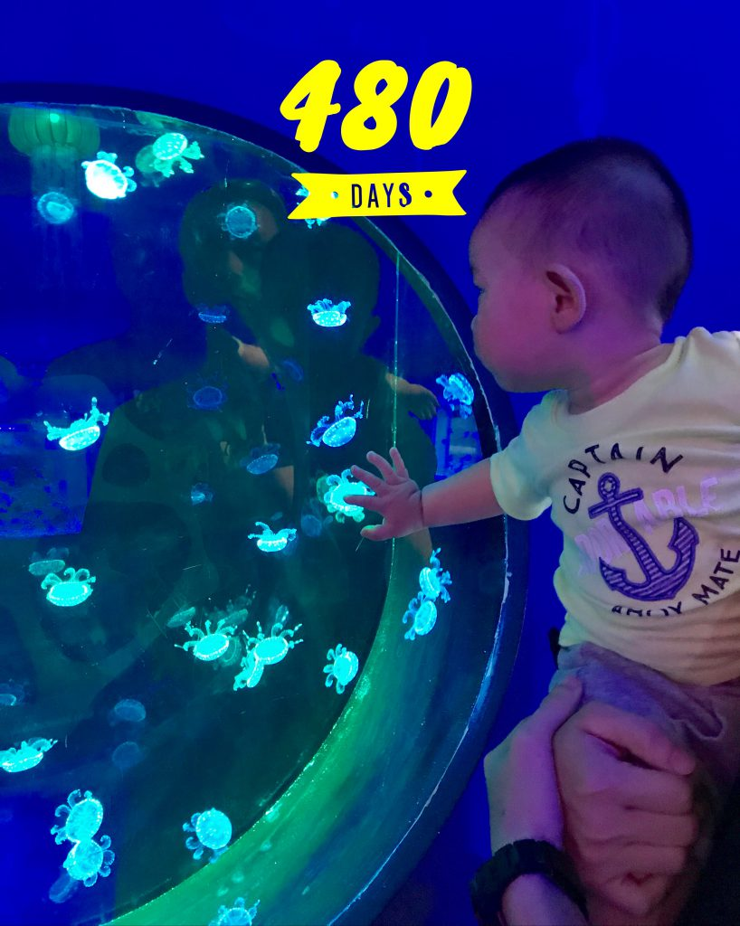Lucas Day 480! Jelly Fish!