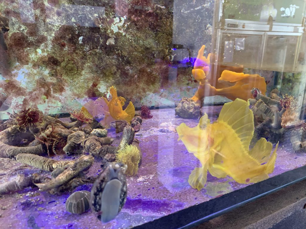 Many fishes!